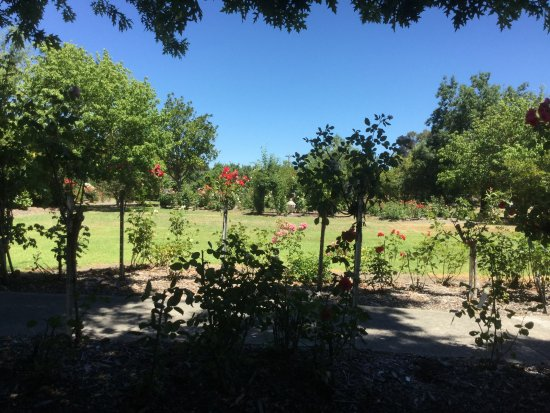 Dixons Creek, Australia: Grounds at Immerse Winery