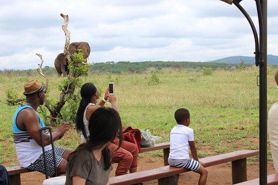Umdloti, Afrique du Sud : Elephant interaction