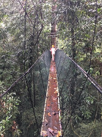 Gunung Mulu National Park, Malaysia: Walkway is roughly 12 inches wide with netting on each side and thick rope