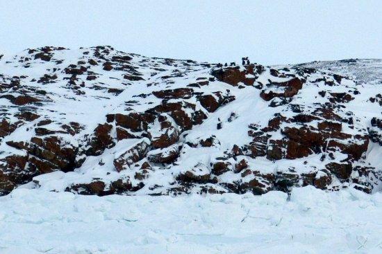 Iqaluit張圖片