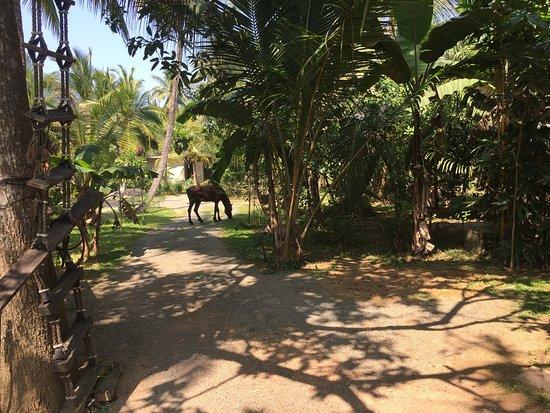 Ayurvedic Village Garden