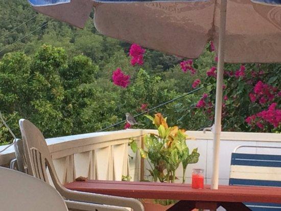 JJ's Paradise Hotel-billede