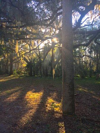 Ocklawaha, FL: Carney Island February 2017