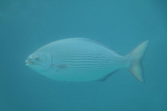 Sea Sky Hakuai: すぐ横を泳いでゆきました