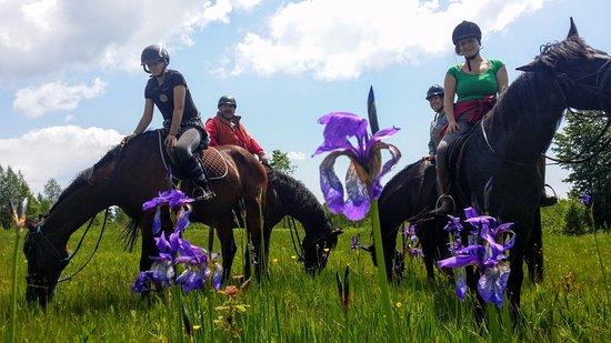 Miercurea-Ciuc, Roemenië: Horse Riding Tours in the Eastern Carpathians