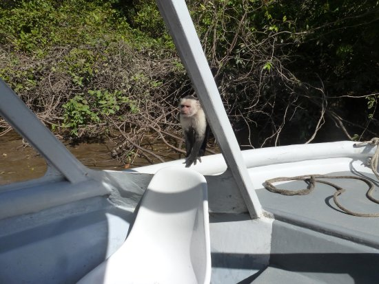 Tours Your Way: White Faced Monkey jumped right on our boat!!
