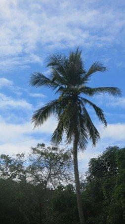 Rio Chavon: vegetation le long du fleuve Chavon