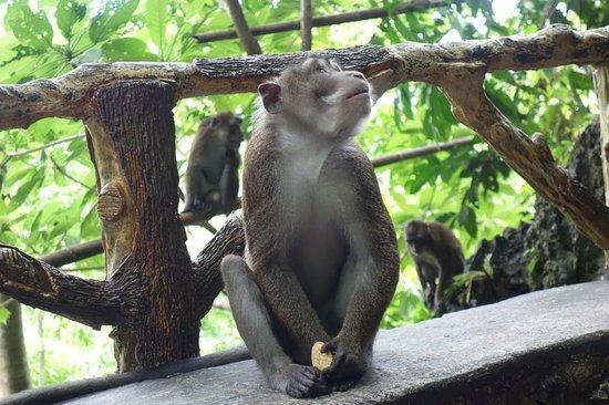 Hindang, Philippines: monkey