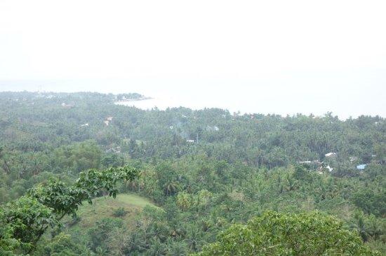 展望台からはhindangの町、その先の海が一望。南国らしい木の森です