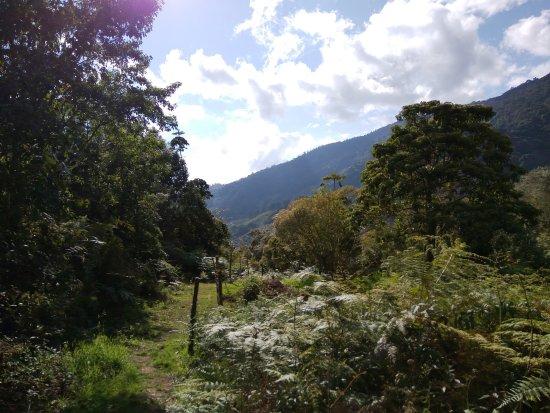 Savegre Hotel, Natural Reserve & Spa: vista desde sendero canto de las aves