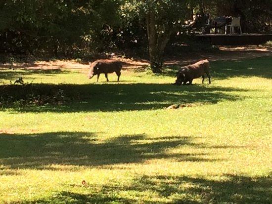 Ngala Private Game Reserve, Sydafrika: photo0.jpg