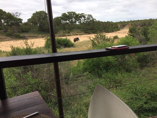 Ngala Private Game Reserve, Sydafrika: photo1.jpg