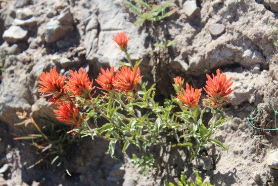 สโนว์เบิร์ด, ยูทาห์: Wildflowers on the mountain in full bloom for July visits!