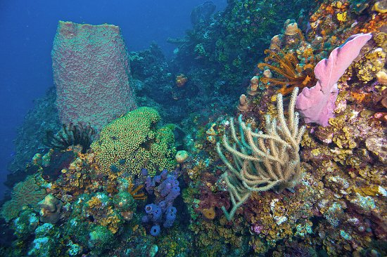 Roseau, Dominika: Colorful reefs loaded with Crinoids