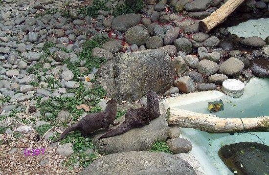 New Plymouth, Selandia Baru: Otter