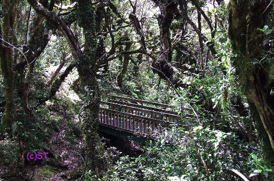 New Plymouth, Yeni Zelanda: short walk route