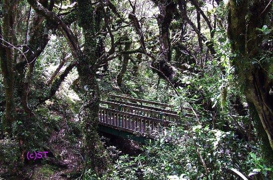 New Plymouth, Selandia Baru: short walk route