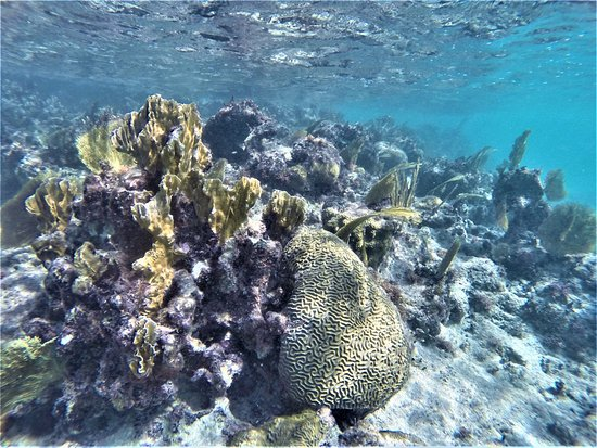 Harbour View Apartments and Studios : snorkeling from the dock