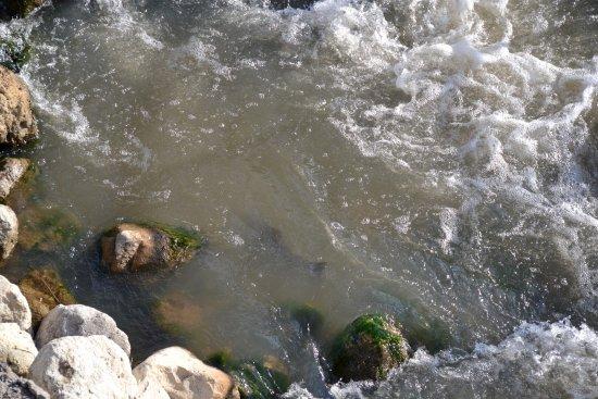 Thornbury, كندا: Fish navigating the rapids