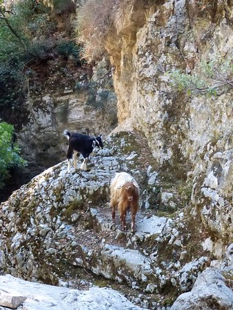 Imbros Gorge : les gorges d'Imbros