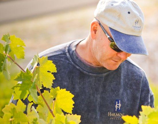 Harmony, Kaliforniya: Winemaker Chuck Mulligan in the vineyard