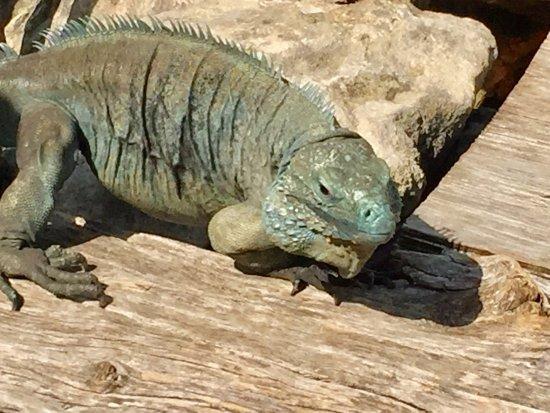 Blue Iguana Recovery Program Safari Tour: photo5.jpg