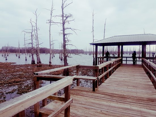 Monroe, LA: Black Bayou Lake National Wildlife Refuge
