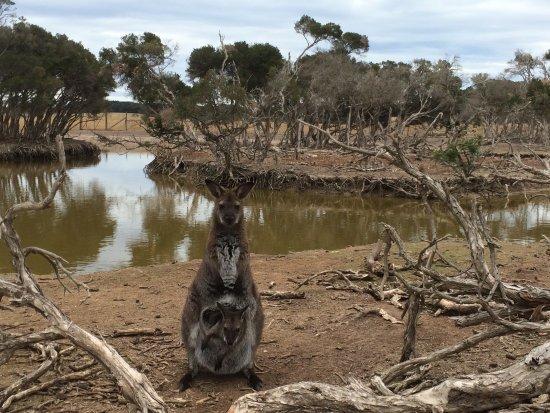 Cowes, Australia: Phillip Island Wildlife Park