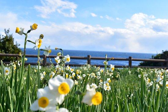 Kashinozaki Lighthouse: photo1.jpg
