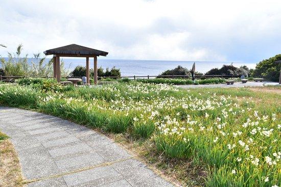 Kashinozaki Lighthouse: photo3.jpg