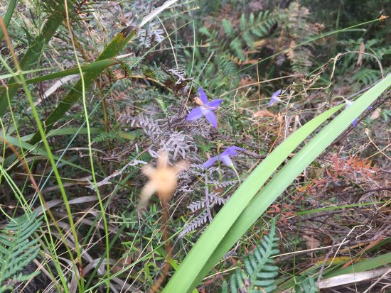 Scamander, Australia: photo4.jpg