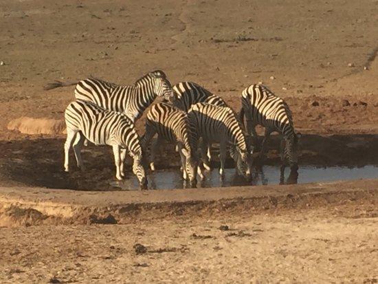 Addo, South Africa: photo0.jpg