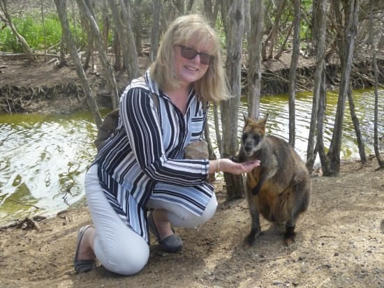 Cowes, Australië: Feeding a Kangaroo - not the paw on the hand