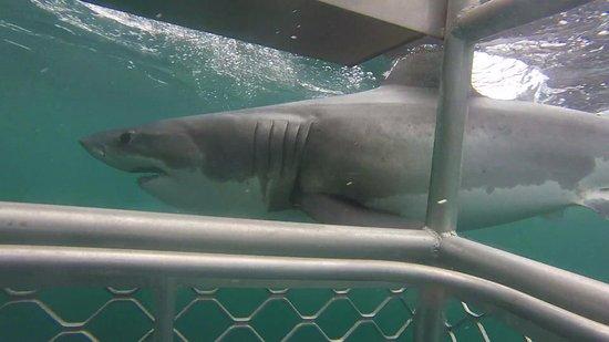Bluff, Nueva Zelanda: shark!