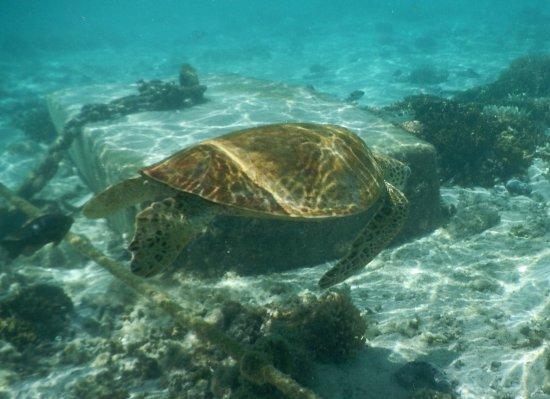 Lady Elliot Island, ออสเตรเลีย: photo0.jpg