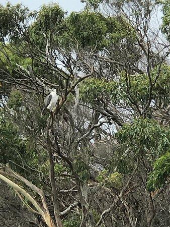 Arthur River, Australia: photo0.jpg