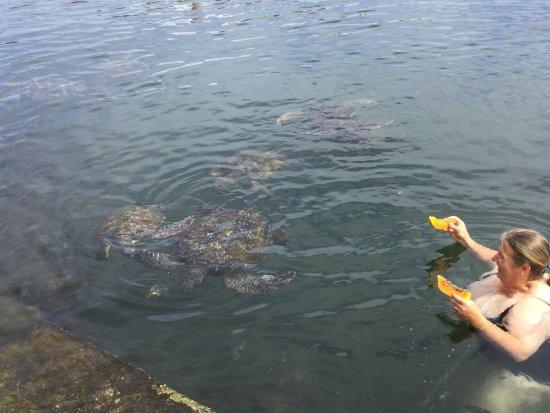Swimming with Turtles: photo0.jpg