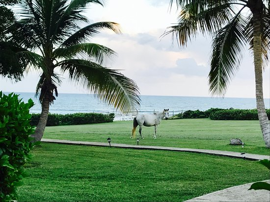 Blue Horizon Boutique Resort: Wild horses from our porch