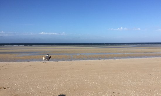 Ceduna, Australia: Beautiful beach Dog friendly