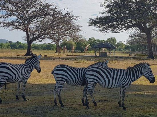 Busuanga Island, Filipinas: Experience safari in the Philippines