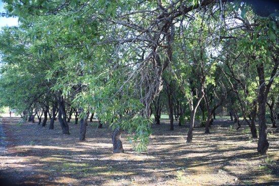 Marion, Austrália: Olive Reserve