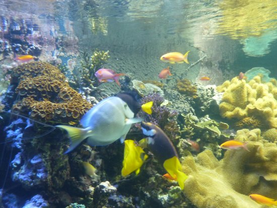 Sea Life Aquarium Work Experience