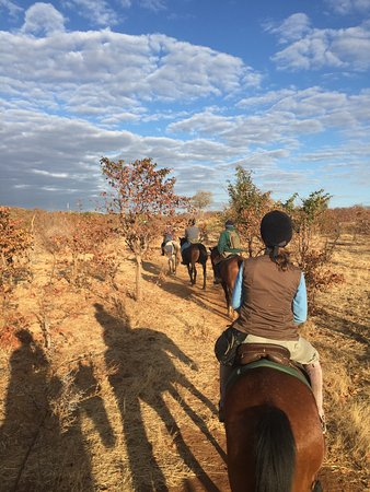 Zambesi Horse Trails - Day Tours: Morning trail