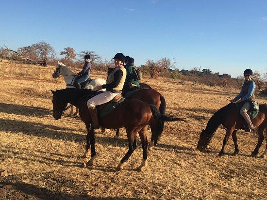 Zambesi Horse Trails - Day Tours: horse back safari