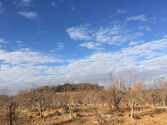 Zambesi Horse Trails - Day Tours: Bush