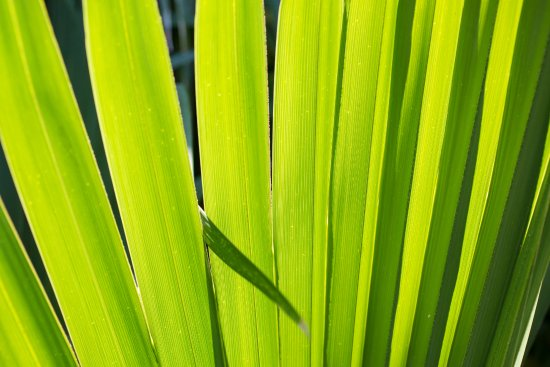 Auld Sweet Olive Bed and Breakfast: Palm Frond in our garden