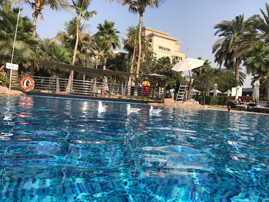 The Westin Dubai Mina Seyahi Beach Resort & Marina: photo0.jpg