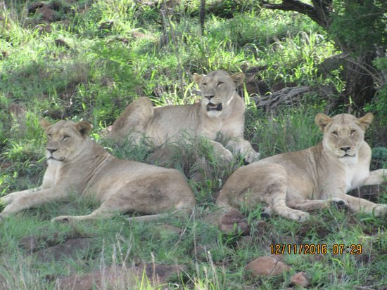 Mkuze Falls game reserve : Mkuze