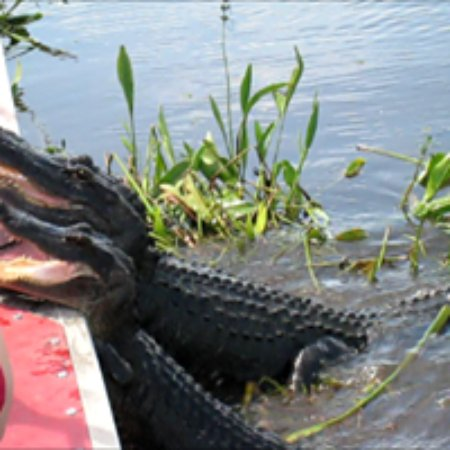 ‪New Orleans Airboat Tours LLC‬