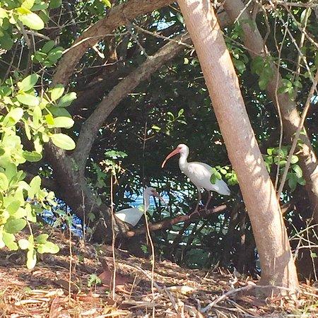 Boca Grande, فلوريدا: photo5.jpg